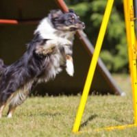 LoopyPoppy-agility (1)