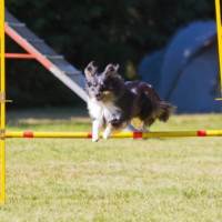 LoopyPoppy-agility (2)
